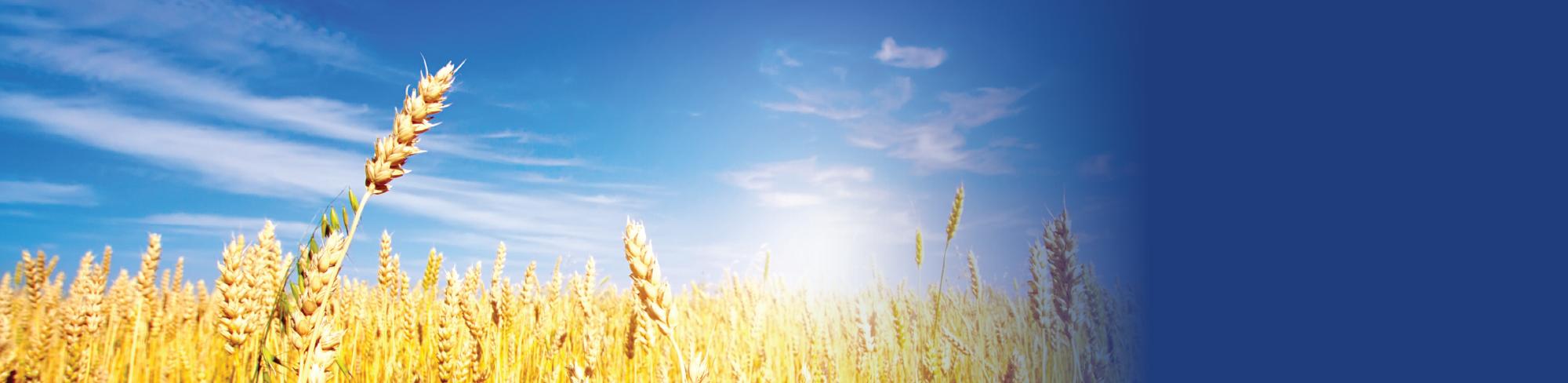 Crop Nutrients Slider.png